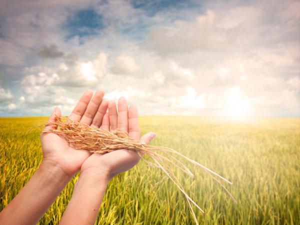 Benvenuto, questo è il blog dei fratelli Lepore, dove potrai apprendere come migliorare le tue colture!