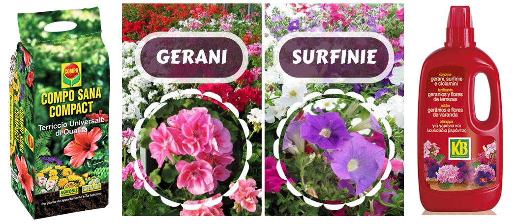 Due consigli e due prodotti specifici per coltivare al meglio le tue Surfinie o petunie pendenti